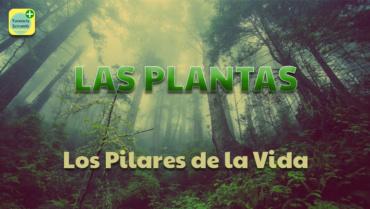 LAS PLANTAS. LOS PILARES DE LA VIDA