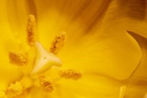 Pólen alergia primaveral