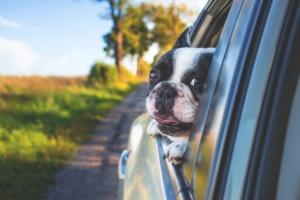 perro terapia animal alzheimer