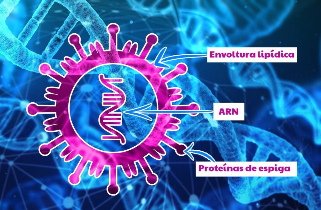 composición Coronavirus