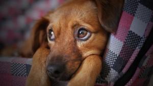 abandono terapia animal alzheimer