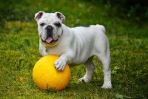 jugar terapia animal alzheimer