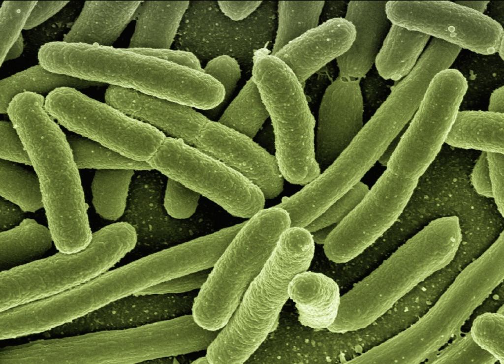 Bacterias atacan por coronavirus