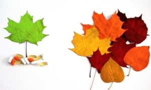 capsulas y hojas
