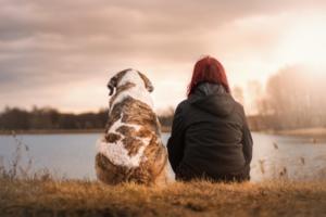 amigo terapia animal alzheimer