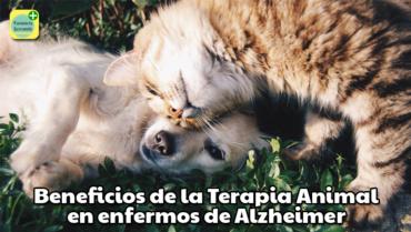 Terapia Animal en enfermos de Alzheimer